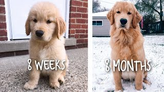 OUR PUPPY GROWING UP - 8 WEEKS TO 8 MONTHS