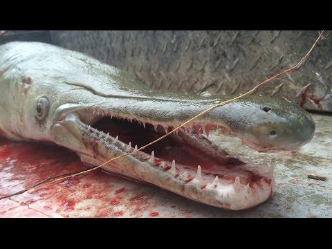 TEXAS GAR FISHING GUIDE SERVICE BOWFISHING TRINITY RIVER Www.texasgarfishing.com