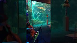Sunset Strings - The Florida Aquarium
