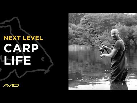 AVID CARP- Carp Life