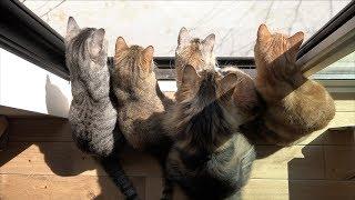 猫たちとくうたと野鳥たち