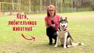 Мой питомец: Сибирский хаски