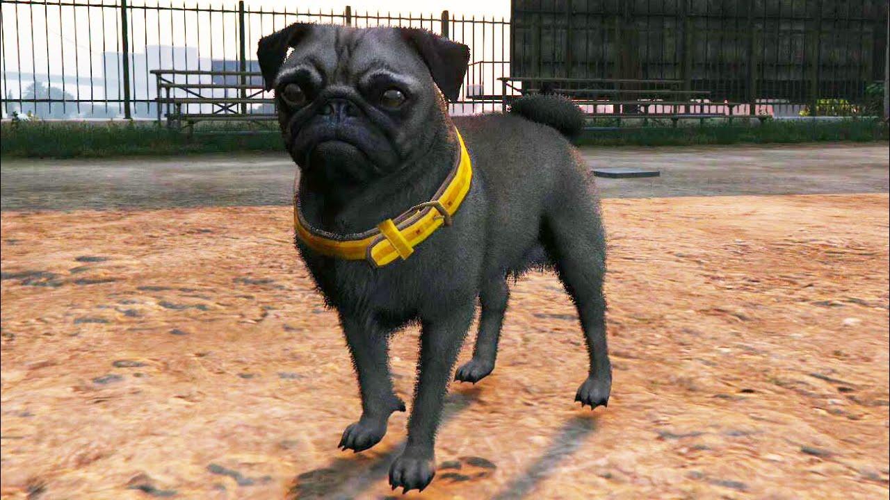 Play As A Pug Dog In Gta  Ps Peyote Hd