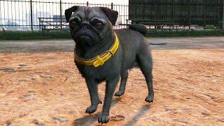 Play As A Pug Dog In Gta 5 Ps4 Peyote Hd