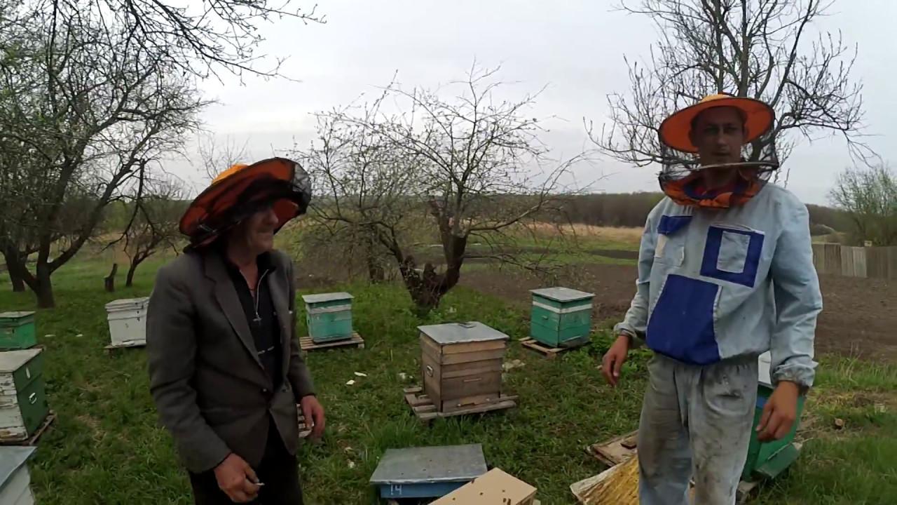 Покупка пчёл