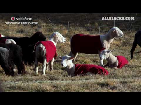 Vodafone Rugby Road Trip: Sheep Rugby