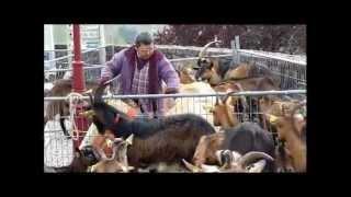 Foire aux chèvres d'Aubazine (19) - dimanche 15 avril 2012