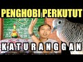 Kolektor Perkutut Katuranggan Wonosari Gununung Kidul  Mp3 - Mp4 Download