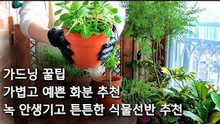 베란다정원 가드닝 꿀팁/튼튼한 화분대추천 /식물선반추천…