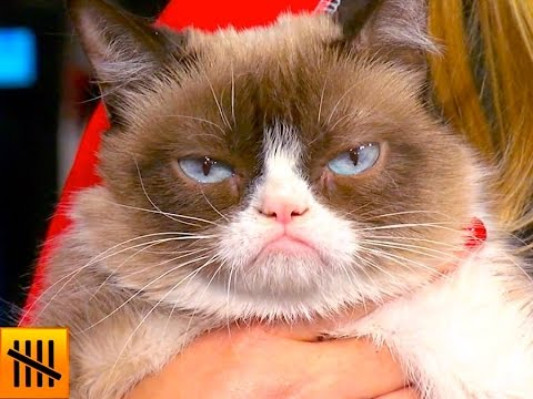 5 Things You Didn't Know About Grumpy Cat