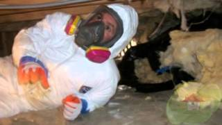 What is Black Toxic Mold? Tallahassee FL