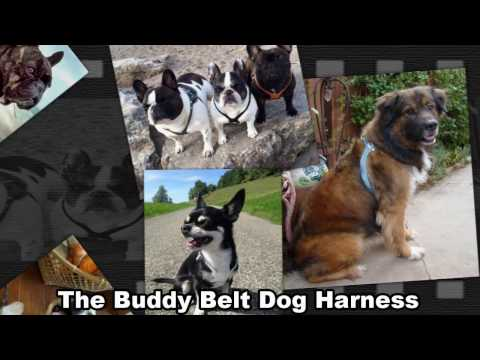 Buddy Belt The Best Dog Harness in The World