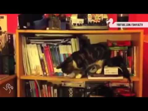 Cats Knocking Stuff On the Floor
