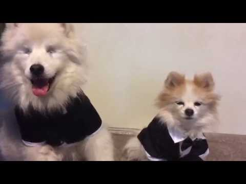 Happy Election Day with The.Fluffy.Duo