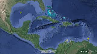 The alien Indo Pacific damselfish, Neopomacentrus cyanomos  at Trinidad 2 3