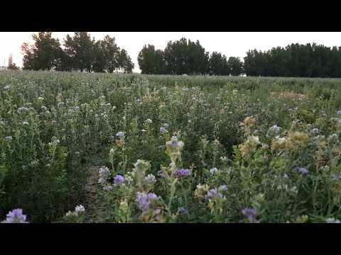 Beautiful farm | 4K VIDEO | Qatar | green land | Beautiful sun set | birds music nature
