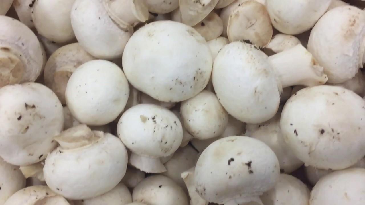 Makan Jamur Dengan Terung Bisa Keracunan Fakta Atau Hoaks