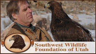 My Own Personal Eagle | Falconry | Golden Eagle Rescue