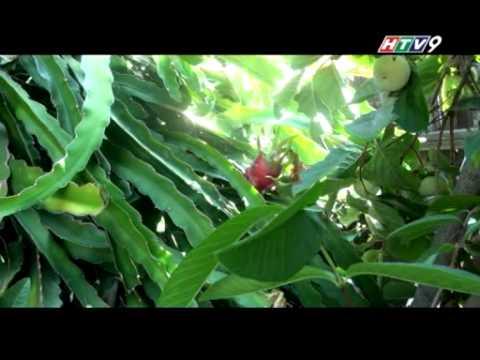 Tu bon phuong troi - Vườn trái cây Việt tại California