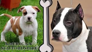 Собаки До и После