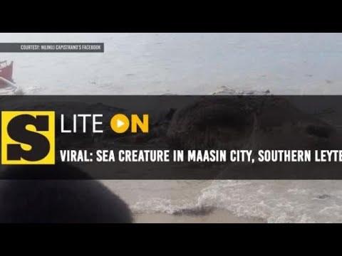 Viral: Sea creature nakit-an sa Maasin City, Southern Leyte