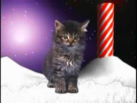 Cute cat song