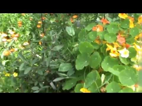 видео: Природное земледелия на 4 сотках! Корнюшина Людмила