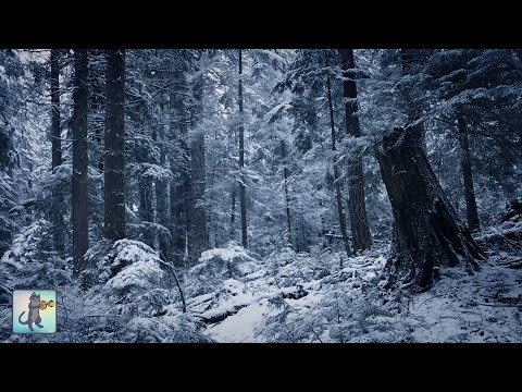 3 HOURS of Relaxing Snowfall: Beautiful Falling Heavy Snow - The Best Relax Music 1080p HD