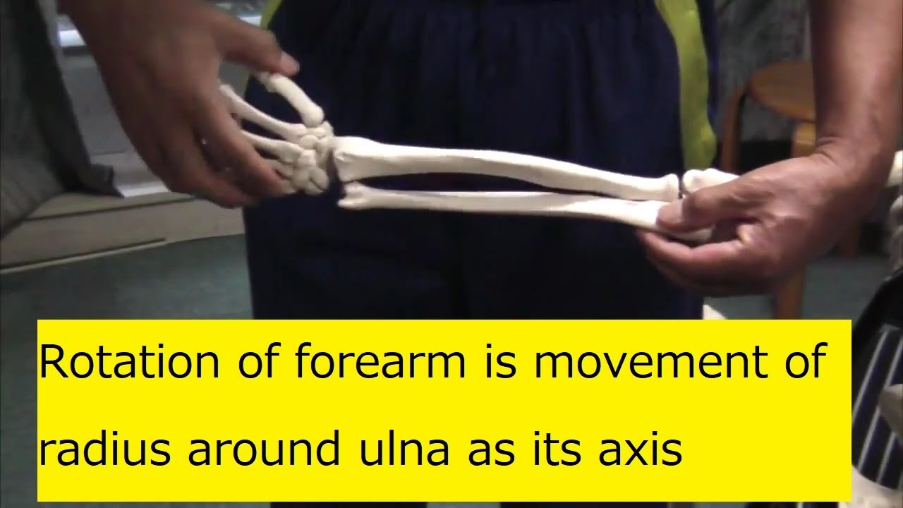 Rotation of forearm is movement of radius around ulna as its axis ...