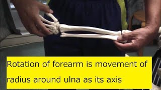 Rotation of forearm is movement of radius around ulna as its axis