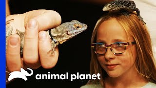Which Dinosaur-Like Lizard Will This Family Choose As Their New Pet? | Scaled
