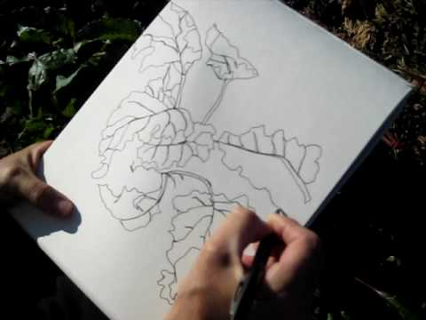 Blind Contour Line Drawing Definition : Contour drawing youtube