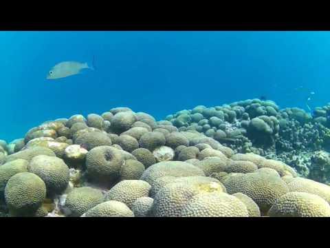 Snorkeling in Grenada Part 9 -- Extended Scene II