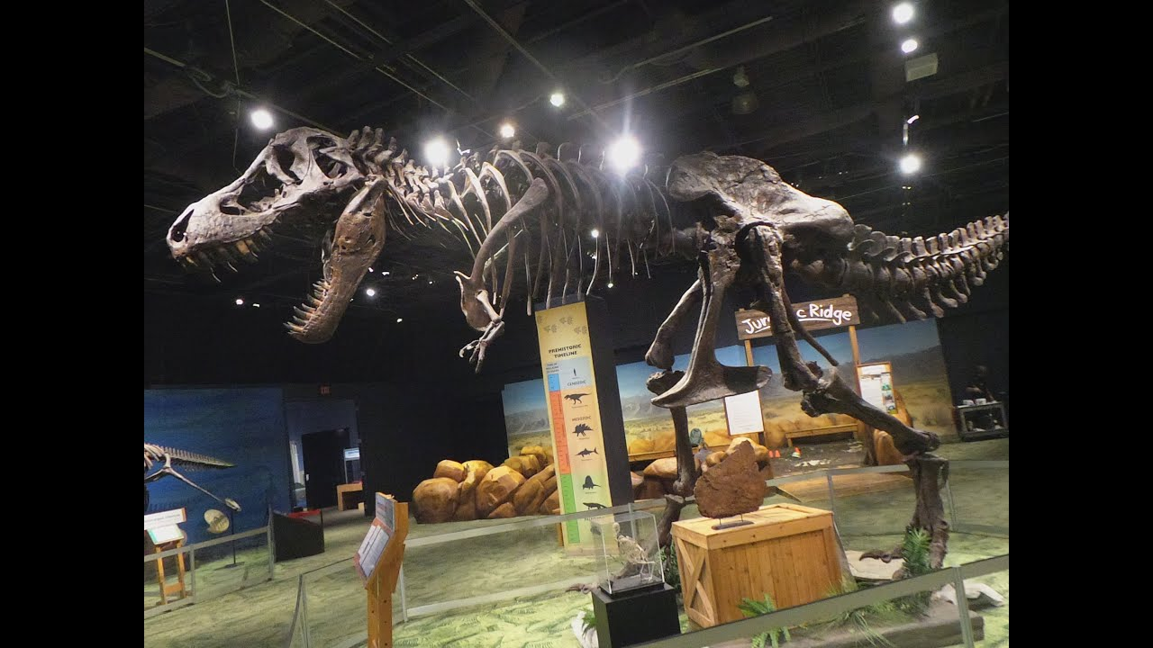 Orlando Florida Museum Of Natural History