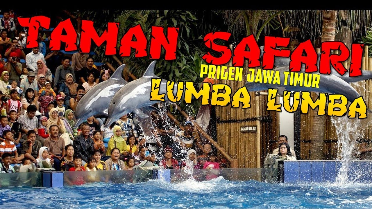 Pertujukan Lumba Lumba Dolphin Show Taman Safari Indonesia 2