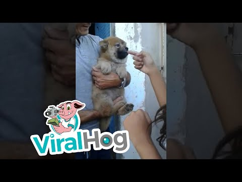 Dog Dislikes Girl || ViralHog from YouTube · Duration:  1 minutes 10 seconds