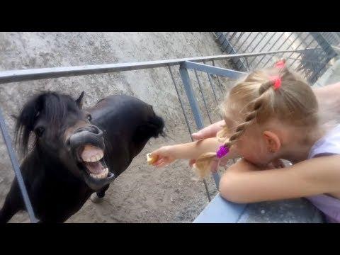 ЗООПАРК / Кормим животных: верблюдов, пони, эму, осликов, обезьян / Одесский зоопарк / Odessa ZOO.