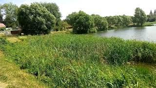 Озеро в агрогородке Раков. Видеосюжет. Рыбалка. Lake in the agro Rakov. The video. Fishing.