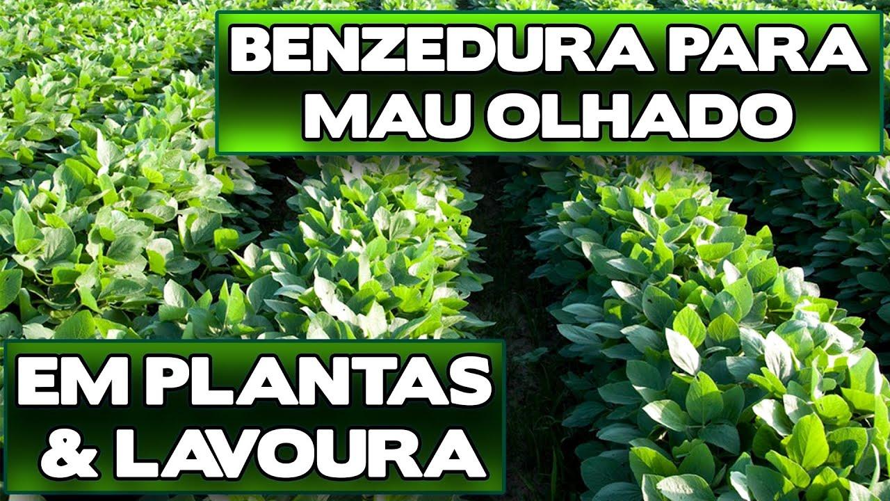 BENZEDURA MAU OLHADO EM PLANTAS E LAVOURA - Benza Comigo!