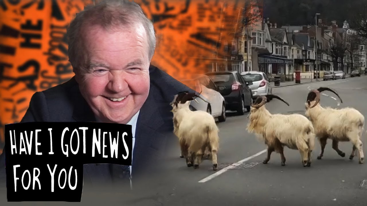 Mountain Goats Take Over Empty Welsh Streets During Lockdown | Have I Got News For You
