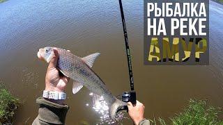 Ловля сазана и коня на быстрой реке Амур Хабаровский край Рыбалка на фидер Приключения