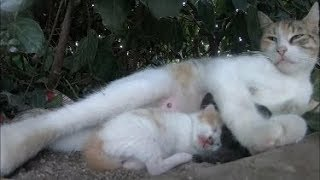 Cat gave birth to two kittens in the bushes