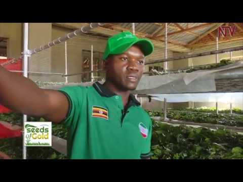 SEEDS OF GOLD: How To Turn Silk Worm Farming Into A Money Spinner