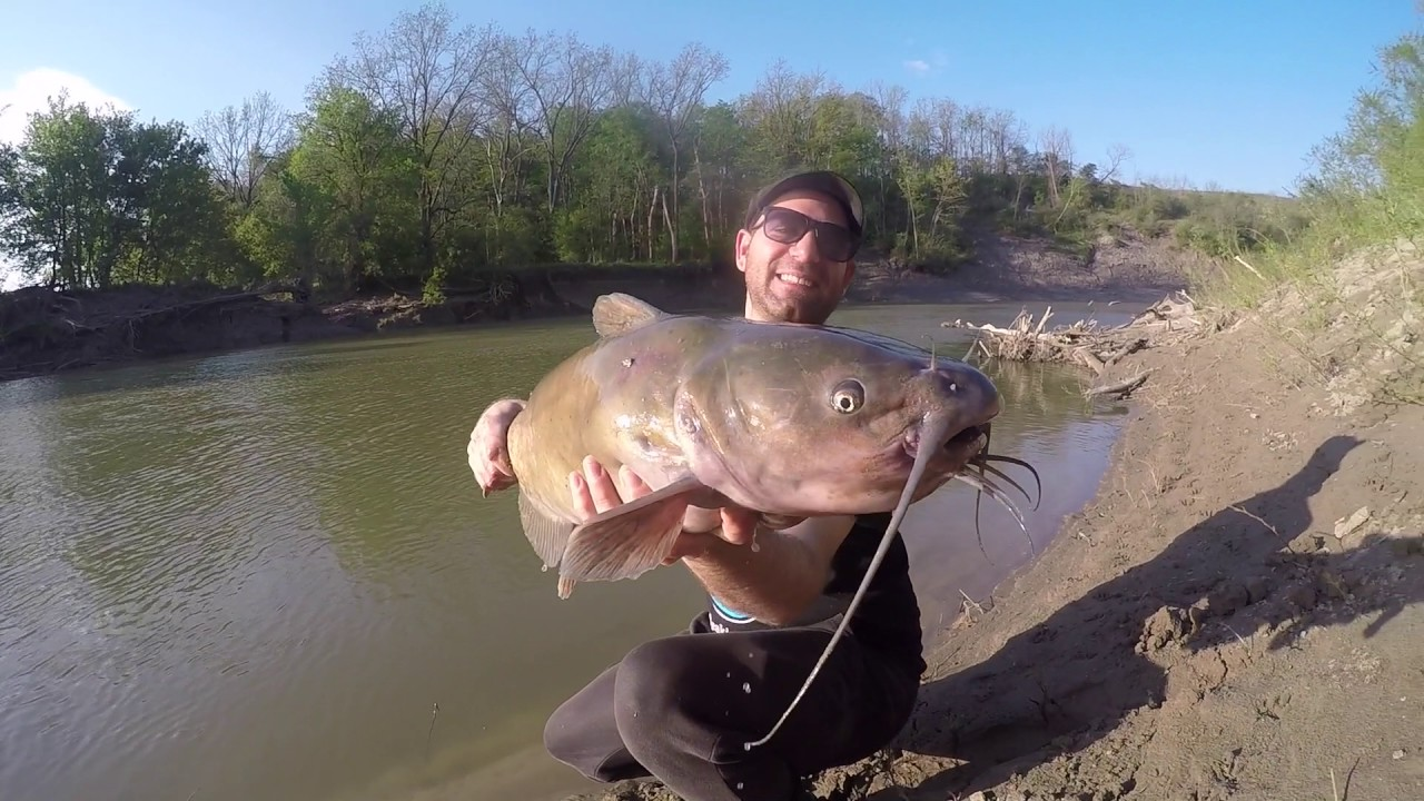 Giant Catfish Thames River Ontario Youtube