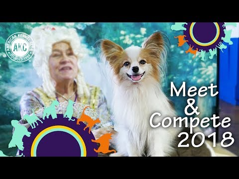 Meet and Compete 2018 - AKC Meet the Breeds & Masters Agility Championship