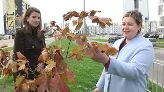 2020-10-22 г. Брест. Экологическая кампания: посадка деревьев.  Новости на Буг-ТВ. #бугтв