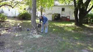 Removing old dead back yard poppler trees