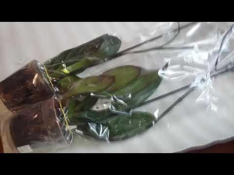 Как упаковать орхидею для перевозки