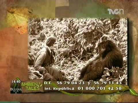 Luchadora incansable - Dian Fossey