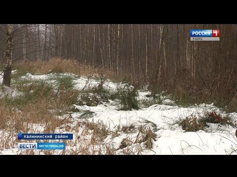 Многодетным семьям Тверской области выделяют участки в лесах и на болотах